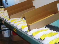 Samples being loaded in boxes