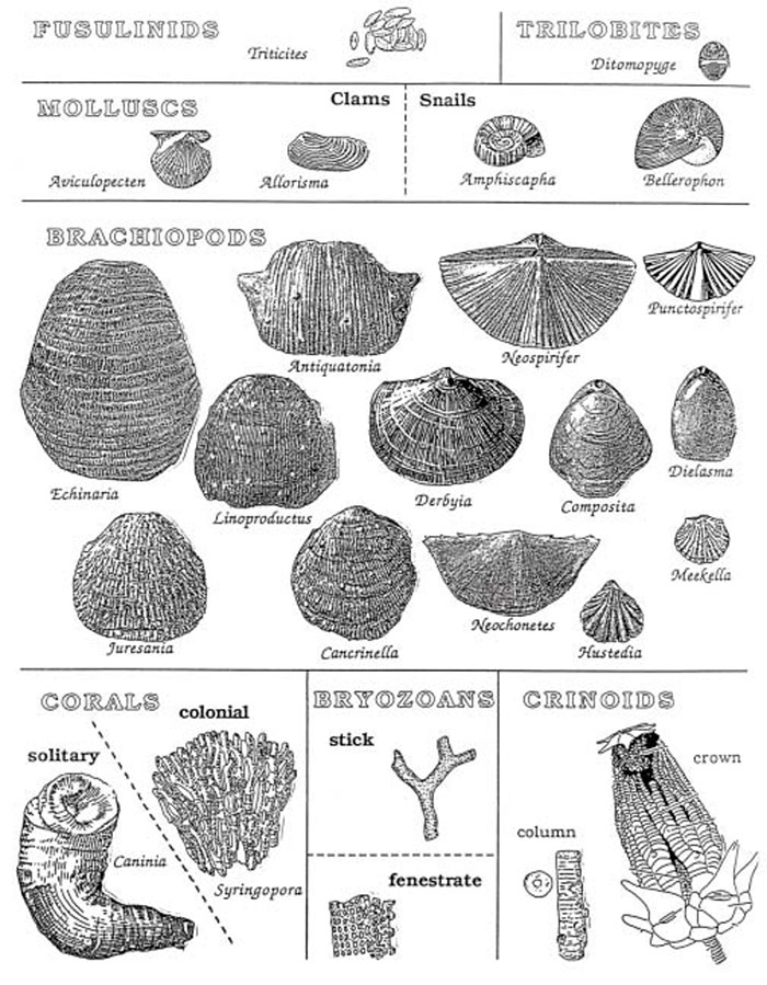 KGS OFR 2003-39--Geology and Fossils of Northeastern Kansas