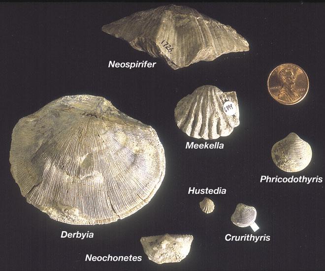 KGS Pub  Inf  Circ  24--Invertebrate Fossils of Kansas