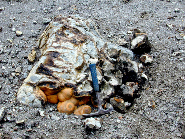 JW_Septarian-concretions-in-Blue-Hill-shale